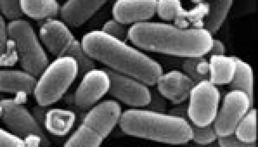 """""""Menneskers fordøyelsessystem rommer milliarder av bakterier, og det er ca. ti ganger flere av dem enn det er celler i kroppen vår."""""""
