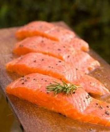 Et ukentlig minimumsinntak av fisk reduserer faren for astma. (Foto: iStockphoto).