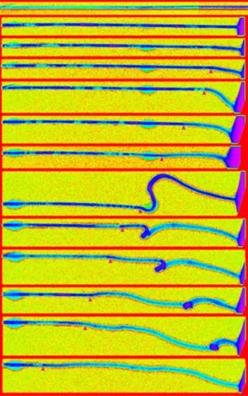 Bildeserie tatt med elektronmikroskop av nanotråden av tinnoksid, etterhvert som den tilføres litium-ioner under opplading og utvider seg  . (Foto: Science/AAAS)