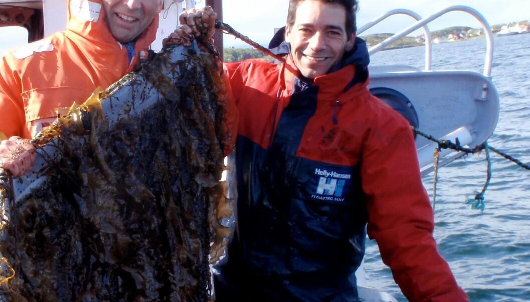 Fra prøvetokt med SINTEFs seniorforsker Egil Lien og Seaweeds Pål Bakken og Artur Simoes. Foto: Seaweed