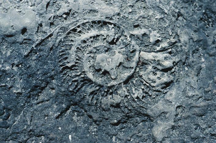 """""""Baugen mener blant annet at forskere ikke kan fastslå hvor gamle fossiler egentlig er, og at menneskelevninger og dinosaurfossiler har blitt funnet om hverandre. (Illustrasjonsfoto: www.clipart.com)"""""""