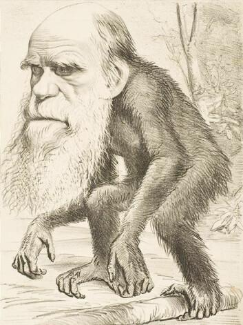 """""""Baugen legger vekt på at evolusjonsteorien ikke er fakta, men en teori. Evolusjonsbiolog Sætre er uenig. (Illustrasjon: Wikimedia Commons)"""""""