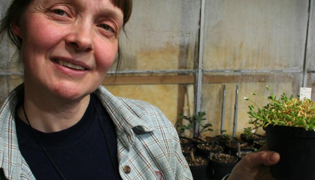 Biolog Anne Krag Brysting ved Universitetet i Oslo. (Foto: Asle Rønning)