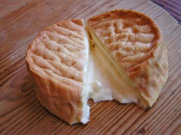 Franskmenn foretrekker, i motsetning til nordmenn, at tradisjonsrike oster, som for eksempel Epoisses, er basert på upasteurisert melk. (Foto: Kjell J. Merok)