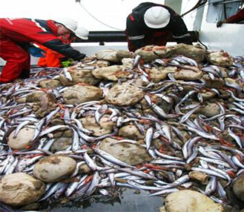 """""""Svamper på båtdekk. Disse svampene er ikke artsbestemt, men dette er en relativt vanlig art i Barentshavet."""""""