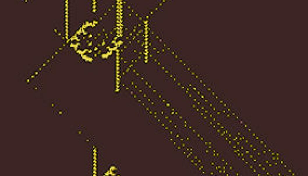 Skjermdump av Gemini på åpen kildekode-programmet Golly, fargelagt for visuell effekt. Øverst er et nytt romskip i ferd med å bli født ut fra instruksjoner/arvestoff i båndet som skrår nedover mot høyre fra romskipet i midten. Romskipet nederst er i ferd med å dø. (Bilde: Golly/Andrew Wade/forskning.no)