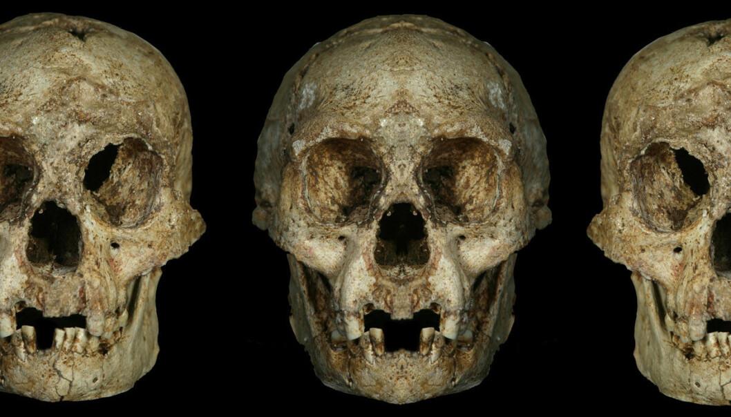 """""""Illustrasjonen er laget for å vise at skallen til Homo floresiensis ikke er symmetrisk, altså et tegn på mikrocephali. Floresskallen er til venstre. I midten og til høyre kranier satt sammen av speilvendte bilder av hhv venstre og høyre halvdel av skallen."""""""