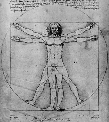 """Leonardo da Vinci laget anatomiske tegninger."""