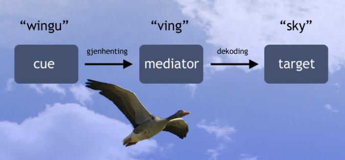 Ved å gjenkalle et stikkord eller en huskeregel (mediator), går det lettere å dekode ordet som skal huskes  (target). (Illustrasjon: Arnfinn Christensen, forskning.no)