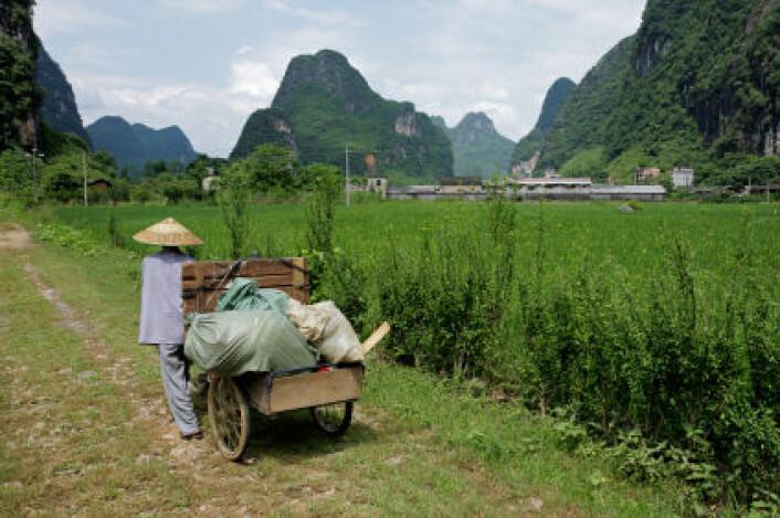 """""""Selv om forskerne ikke tror verden går tom for fosfor før om 80-90 år, så har Kina allerede stanset all eksport av næringsstoffet. (Illustrasjonsfoto: www.colourbox.com)"""""""