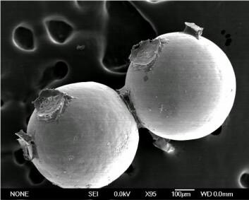 Avbildning i elektronmikroskop av to glassperler som sandslottormen har limt sammen. Herdet lim kan ses mellom perlene. (Foto: Russell Stewart, University of Utah)