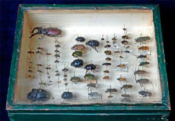 """Ordet museum betyr et sted der musene dyrkes. Og musen for historie var bare en av mange, påpeker professor Anne Eriksen. Hun nå ute med boka """"Museum. En kulturhistorie""""."""