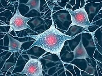 Immunforsvaret i hjerna viser seg å ha ei hittil ukjent rolle i høve til sjukdomen schizofreni. Immunmolekyl kan gå til angrep og øydelegge synapsar. (Illustrasjonsfoto: iStockphoto)
