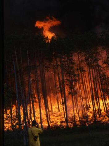 Skogbrann i Sibir. (Foto: Laboratory of Tree-Ring Research, The University of Arizona)