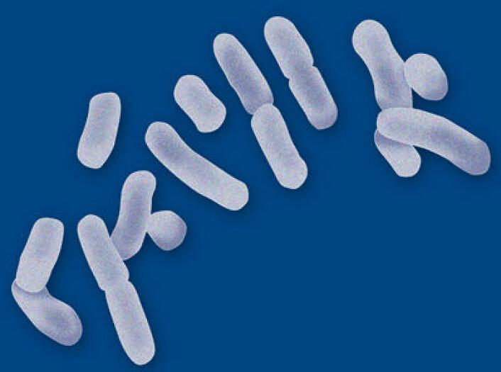 Melkesyrebakterier er nyttige bakterier som gjennom historien har blitt forbundet med fermenteringer av mat