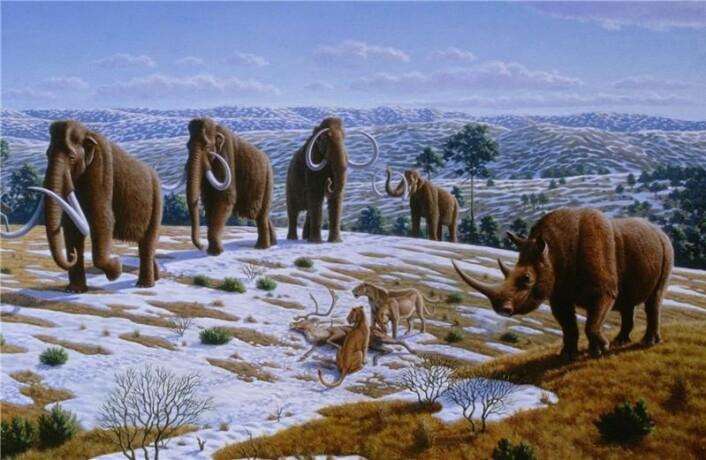 """Disse store, pelskledde pattedyrene levde i Spania og Portugal frem til for 10.000 år siden. Da sluttet den siste istiden, og det ble for varmt for dem. (Illustrasjon: Peter Novák)"""""""