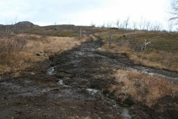 Kjørespor i Mauken skytefelt. (Foto: Christian Uhlig)