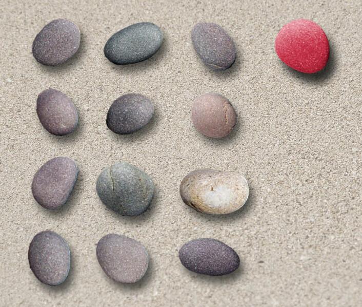 Tre steiner ordnet i fire rader blir i alt 3 x 4 = 12 steiner. Dette er multiplikasjon. Men ved å legge til (addere) enda en stein (rød), blir multiplikasjons-systemet ødelagt. (Bildemontasje: Arnfinn Christensen)