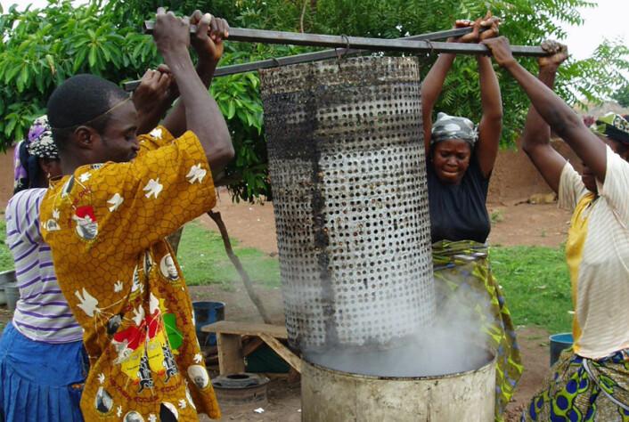 Ved å koke frøene i kortere tid kreves det mindre brensel. Siden ved er en knapp ressurs i området, er det mye penger å spare. (Foto: Jesper Vind)