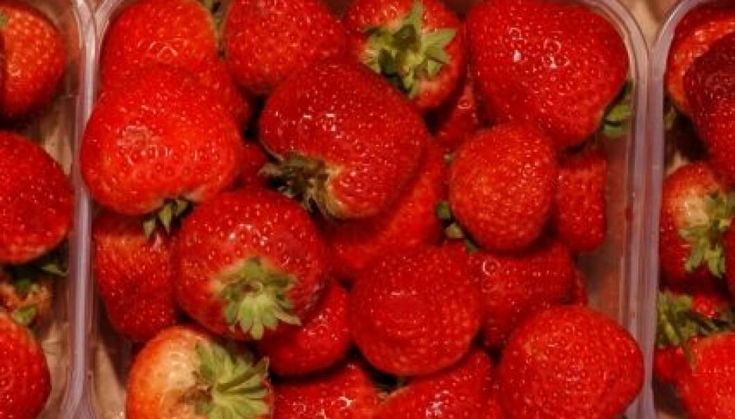 Jordbær i kurv. (Foto: Ragnar Våga Pedersen)