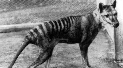 Vil klone utdødd rovdyr