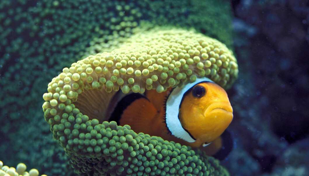 Alarmerende om verdens korallrev