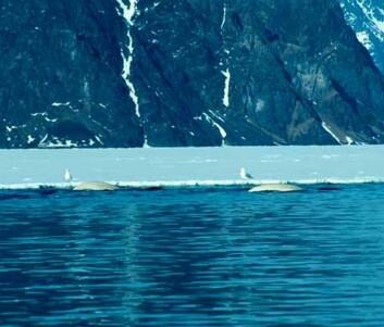 """""""Storfjorden. (Foto: Kit & Christian)"""""""