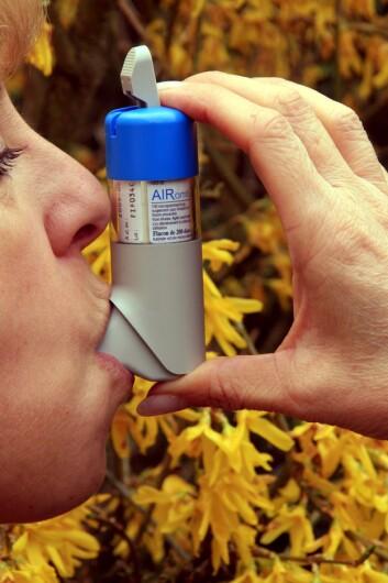 """""""Mellom ti og tjue prosent av norske barn har astma.Det har vært jevn økning i forekomsten av astma de siste 40 årene. (Illustrasjonsfoto: www.colourbox.no)"""""""