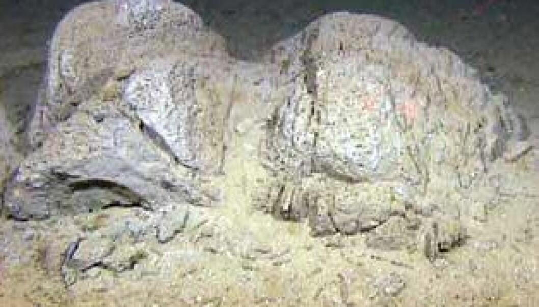 Avansert undervannskamera og prøvetakingsutstyr har gitt ny kunnskap om havbunnen i det sørlige Barentshavet. En naturtype på store havdyp med slike leireformasjoner har ikke tidligere vært beskrevet av forskere.