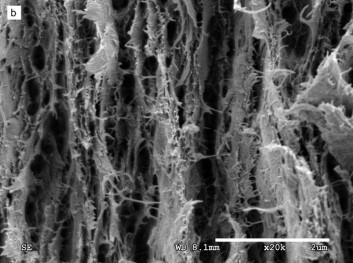 """""""Den råsterke materialstrukturen ut i svært høy oppløsning. Utgangspunktet er vanlig cellulose. Forskerne endret egenskapene til cellulosen, blant annet ved hjelp av forskjellige kjemikalier. Resultatet er nanofibre som kan brukes til å lage papir. Foto/rettigheter: American Chemical Society"""""""