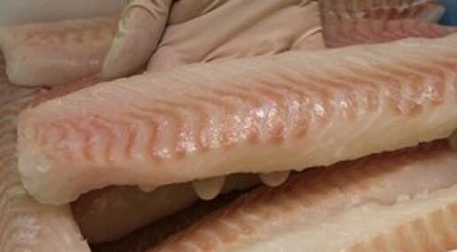 Lystrer etter parasitter i fileten