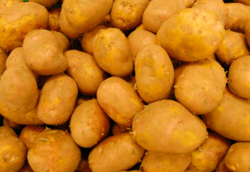 Produsenter og forbrukere har ulik oppfatning av hva som er god potetkvalitet.