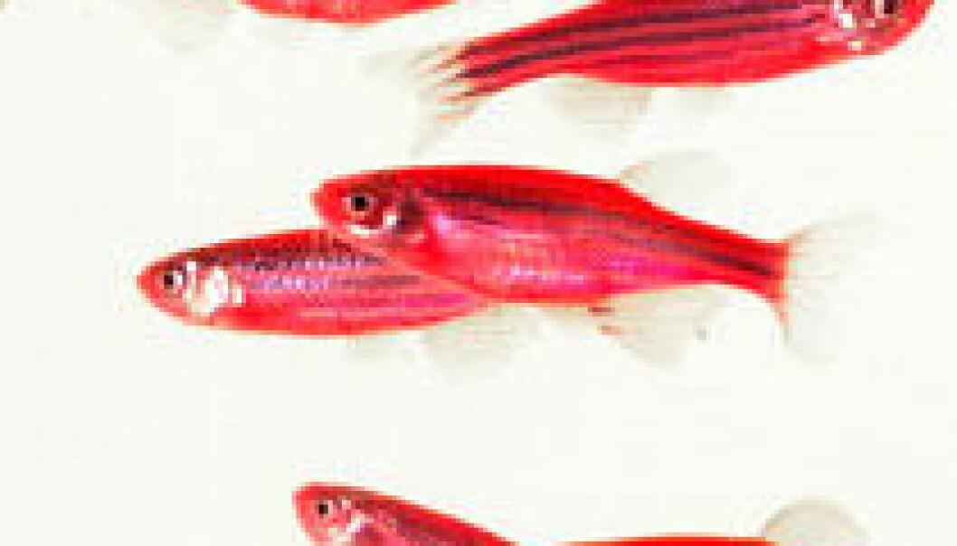 """""""Glofish. (Foto: Yorktown Technologies)"""""""