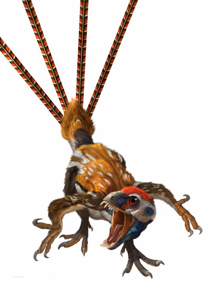Epidexipteryx hui. (Illustrasjon: Qui Ji & Xing Lida)