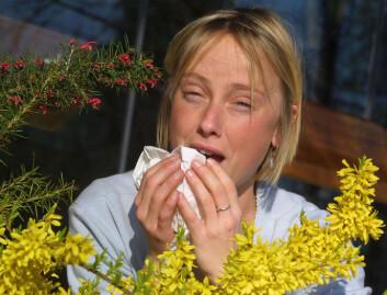 """""""Studien, der 28 personer med høysnue og allergi deltok, viser at stress både forverrer og forlenger allergiske reaksjoner. Mest utsatt er personer som i utgangspunktet er stressa eller urolige. (Foto: Colourbox.com)"""""""