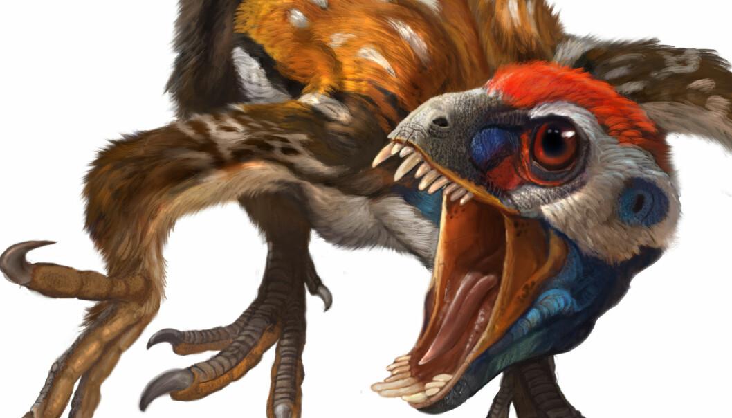 Epidexipteryx, en ny fjærkledd dinosaur fra juraperioden. De lange halefjærene var høyst sannsynlig til å vise frem. (Illustrasjon: Qui Ji & Xing Lida)