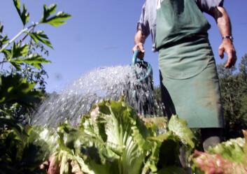 """""""Forskerne mener at faren for å pådra seg aspergillose kanskje bør vurderes som et risikomoment for gartnere.(Foto: Colourbox.no)"""""""