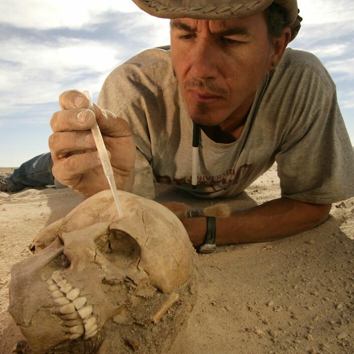 Paleontologen Paul Sereno fra University of Chicago stabiliserer den nesten perfekt bevarte hodeskallen av en kvinnelig Tenerian, funnet på det arkeologiske feltet Gobero i Niger. (Foto: Mike Hettwer, Project Exploration)