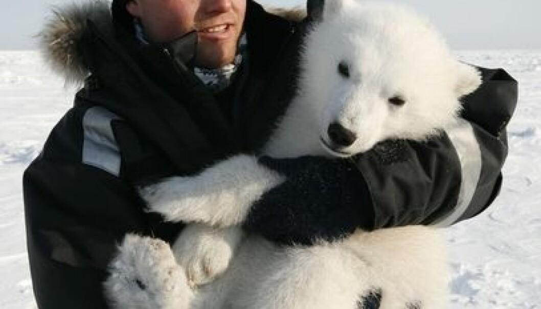 Biolog Magnus Andersen med isbjørnunge. (Foto: Jon Aars/Norsk Polarinstitutt)