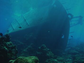 """""""Dette 100 fot lange skipet grunnstøtte ved Palmyra-atollen i 1991. Dette førte til at hele revet nå er truet av sjøanemonenRhodactis howesii, mener forskerne. (Foto:Thierry M. Work, USGS)"""""""