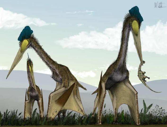 """""""Ei gruppe Quetzalcoatlus-øgler, en type kjempeazhdarchid, spaserer rundt på en bregneslette, på jakt etter babydinosaurer til lunsj. (Foto: Mark Witton)"""""""