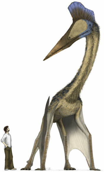 """""""Mark Wiitton ved siden av det største flygende dyret vi kjenner til, azhdarchiden Hatzegopteryx. Den har en skulderhøyde på tre meter og kjever på godt over to meter. (Foto: Mark Witton)"""""""