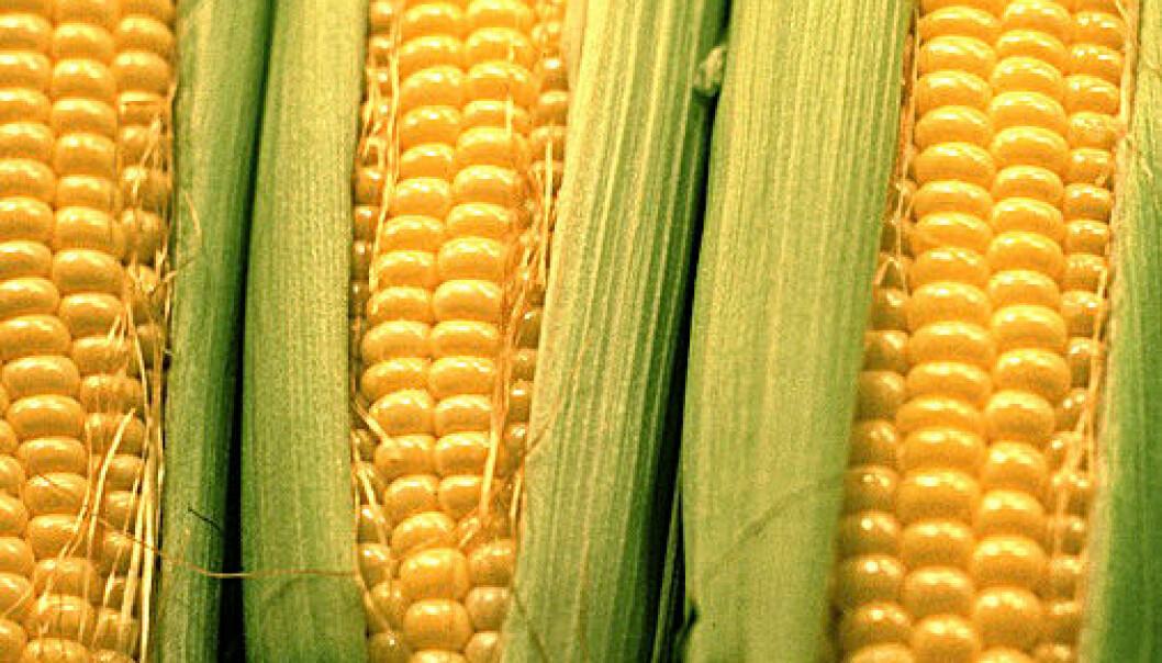 Nanoteknologi kan løse matvarekrisen