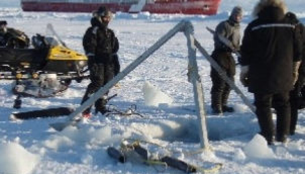 Arktisk vårløsning