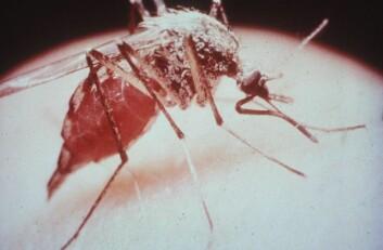 I følge verdens helseorganisasjon dør to barn i minuttet av malaria.