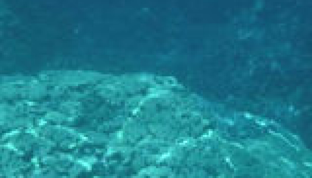 Bakterier myldrer i dypet