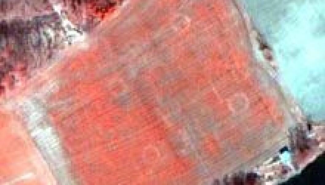 Satellittbilde av jorde ved Numedalslågen. De fire sirklene på jordet markerer ringgraver. Bildet er tatt av satellitten QuickBird. (Foto: Norsk Regnesentral/Norsk Romsenter/Riksantikvaren)