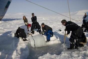Studenter ved UNIS sjekker istykkelsen i Storfjorden på Svalbard. (Foto: Kjersti Lundmark Daae)