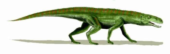 Krokodille-forfar: Gracilisuchus stipanicorum, en av de små crurotarsanerne. (Ill.: Arthur Weasley)