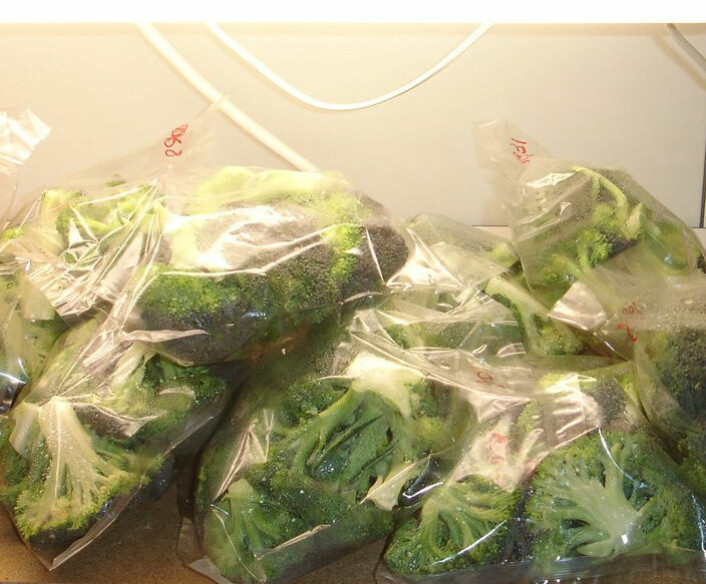 Broccoli utsettes for lys i forsøkene på universitetet i La Rioja.